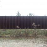 Забор деревянный штакетник тёмный цвет